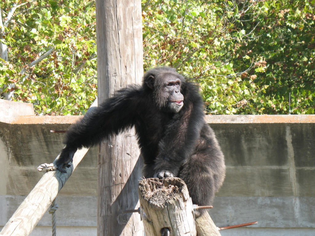 animal rescue Archives - Project Chimps